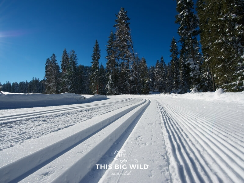 With the camera low to the ground, on the left side is a pair of parallel tracks packed into the snow extending off into the distant tree line. On the right is a groomed ski trail extending in the same direction.