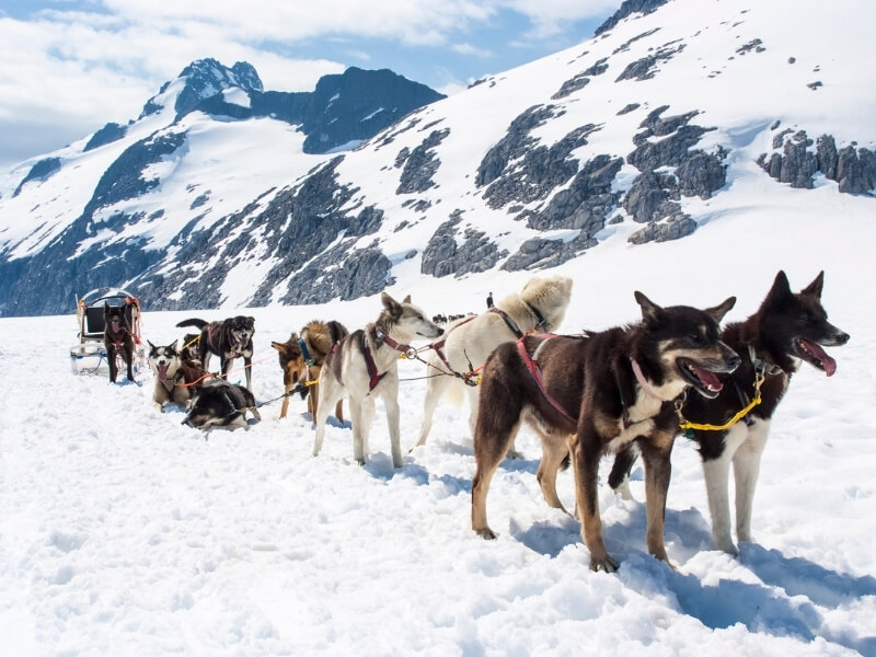 A team of 8 sled dogs is taking a break while harnessed to a sled with snow-covered mountains towering behind them.