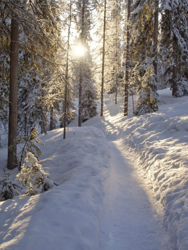 The sun peeks through the snow covered trees near Rovaniemi Finland. A hiking path is worn in the snow weaving through the trees.