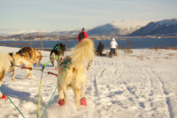 Tromso Villmarkssenter Dog Sledding Tour Review