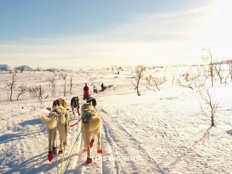 White huskies wearing red dog boots are pulling a sled through the snow covered countryside. In the left in the distance are mountains and to the right the sun is shining low in sky.