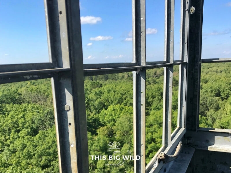 Trees stretch out to the horizon as seen through the metal frame of the windows at the top of the St Croix State Park fire tower.