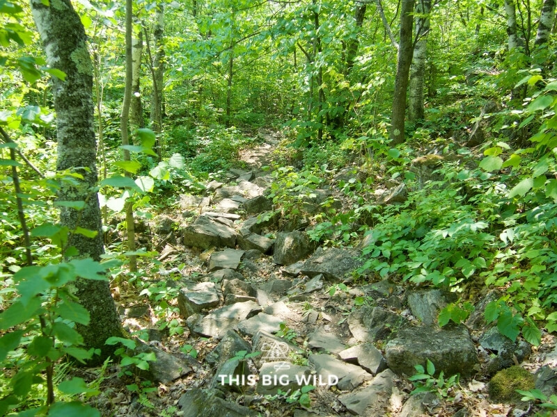 Large rocks make up the entire trail through a wooded section of the Ely's Peak Loop Trail near Duluth Minnesota.